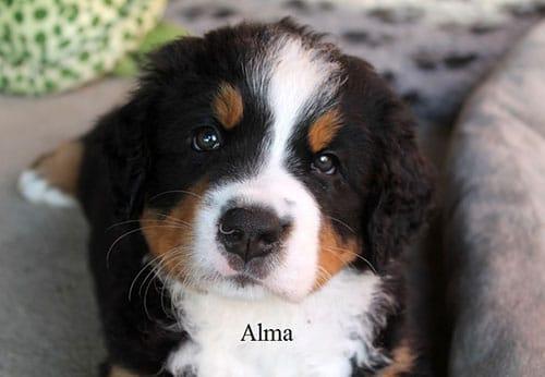 Alma mit 6 Wochen