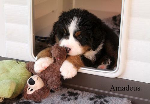 Amadeus mit 6 Wochen
